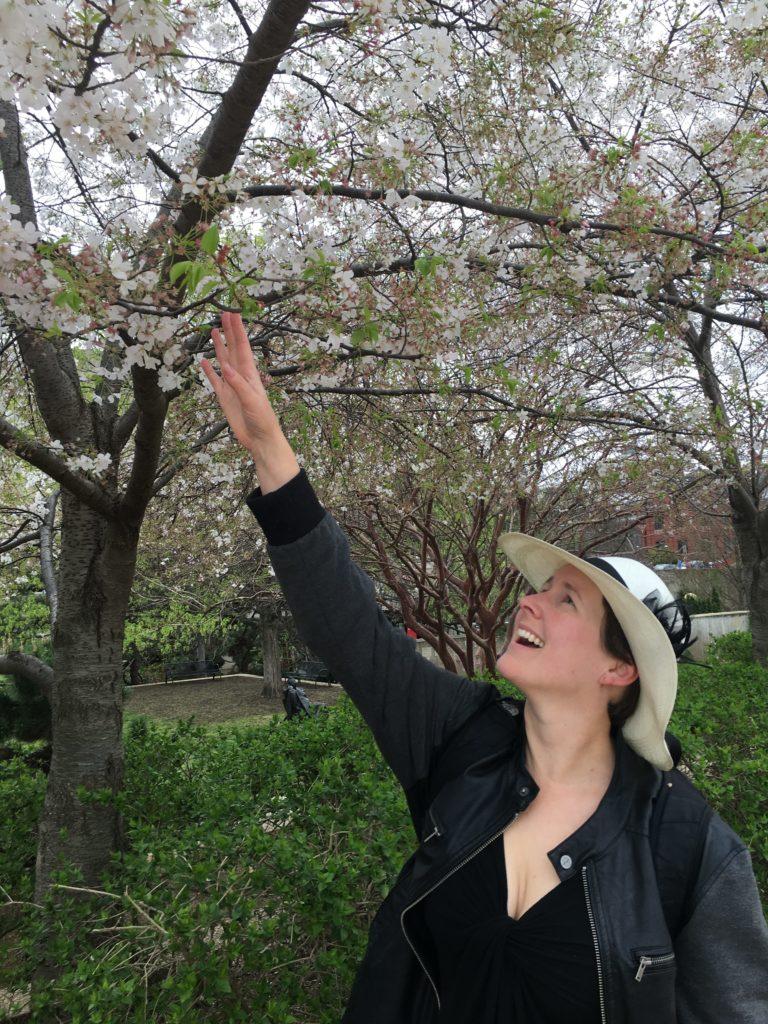D.C Cherry Blossoms